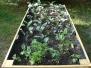 Pěstujeme na zahradě